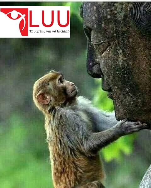 Chỉ Số Tâm Linh SQ (Spiritual Quotient) quan trọng hơn cả chỉ số IQ và EQ